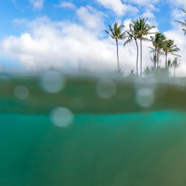 project: ocean